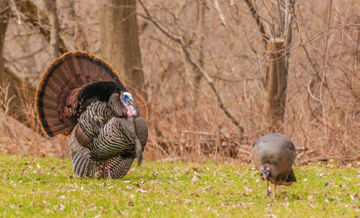Turkey Hunting at Dunaway
