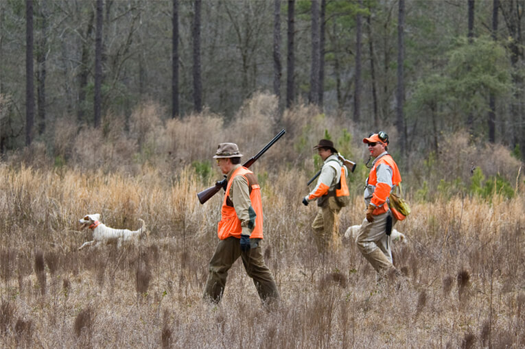 Upland Bird Hunting at Dunaway