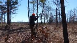Quail Hunting
