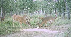 Bucks1